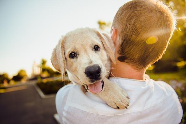 מבריק אימוץ כלב: עלויות והוצאות הכרוכות בגידול כלב   Vets4pets EY-64